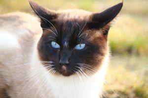cat-1184785_960_720
